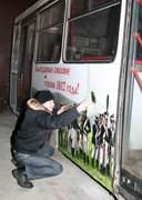 Патриотические автобусы в Смоленске
