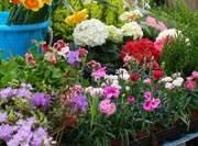 Выставка-ярмарка Сад-огород
