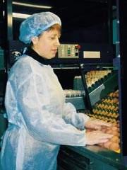 Новая жизнь птицефабрики «Сметанино»