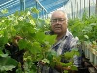 Починок виноград