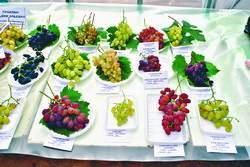 День виноградаря
