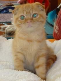В Смоленске прошла выставка кошек