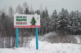Незаконная вырубка елей в Смоленской области подорожала в пятьдесят раз