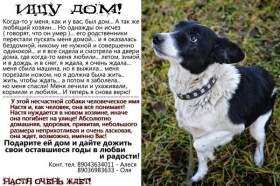 Подарите шанс на уют собакам с трагичной судьбой