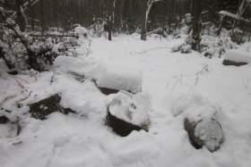 В Смоленской области проводят оперативно-профилактическое мероприятие «Лес»