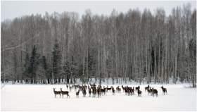 Январь в смоленских лесах