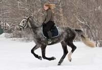 конный праздник