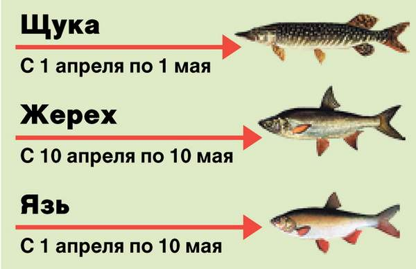 весенний запрет ловли рыбы на спиннинг