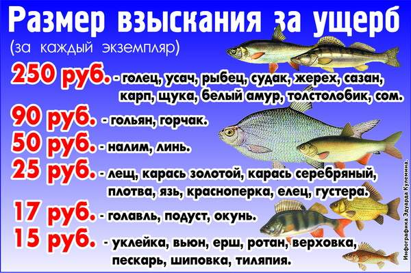 Сроки запрета на рыбалку в курганской области