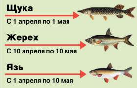 Рыбалка под запретом