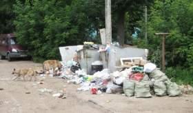 На отлов и содержание бездомных собак в Смоленске не хватает средств