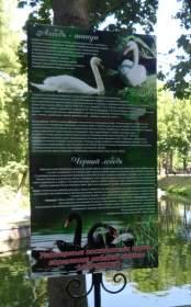 Смоляне дали имена лебедям, живущим в Лопатинском саду