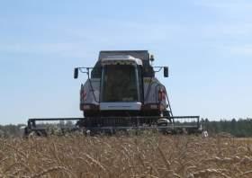 Зерновые не радуют