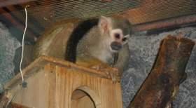 В смоленском зоопарке появился новый экзотический обитатель