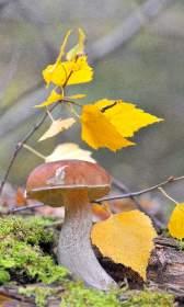 Какой будет осень по народным приметам