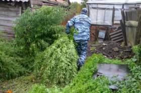 В Смоленской области у пенсионерки изъяли 600 килограммов конопли