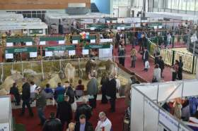 Смоленские предприятия представили продукцию на агропромышленной выставке «Золотая осень»