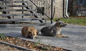 Собачий террор в Смоленске