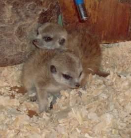 В Смоленском зоопарке снова пополнение