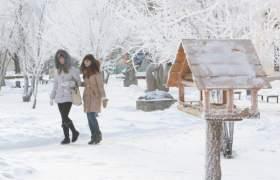 В Смоленске вновь появится сеть кормушек для птиц