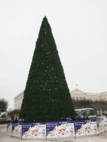 На площади Ленина установили главную елку Смоленска