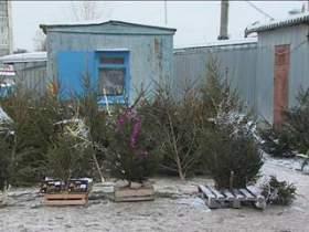В Смоленске открылись елочные базары