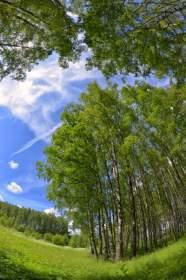 Смоленская область вошла в число лучших по качеству госуправления лесами