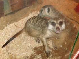 В смоленском зоопарке выберут лучшую пару