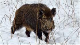 В Демидовском районе задержали браконьеров