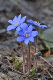 Весна на распутье