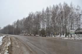 Березовую рощу в поселке Вишенки в Смоленске не отдали под застройку