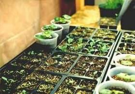 На поддержку растениеводства Смоленской области выделили более двух миллионов рублей