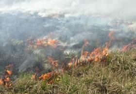 37 выжженных гектаров