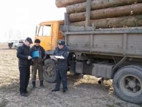 """""""Черные лесорубы"""" вырубили лес на 2,24 млн рублей"""