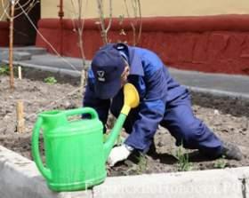 «Жилищник» приглашает смолян озеленить придомовые территории