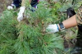 В Смоленской области стартовал сезон посадки леса
