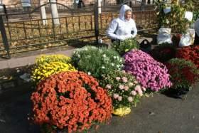 В Смоленске пройдет ярмарка «Сад - огород»