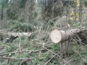 В Рославльском районе задержали «черных» лесорубов