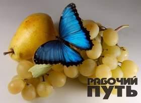 В Смоленск привезли тропических насекомых