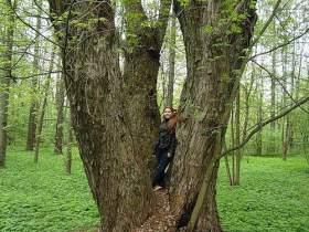 В Сычевском районе появилось дерево-памятник
