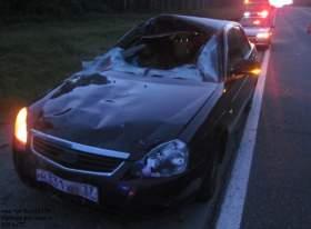 В Смоленской области в ДТП с лосем погиб человек