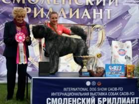 Как в Смоленске воспитать четвероногого чемпиона