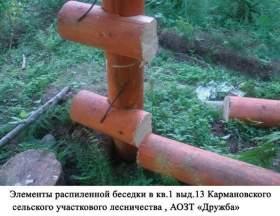 В Смоленской области активизировались «лесные» вандалы